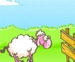 Kaçak Koyun