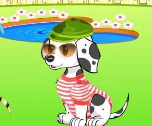 Köpek giydir