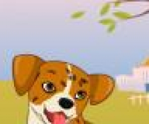 Köpek Tasarla